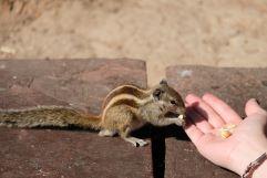 Chipmunk tourist