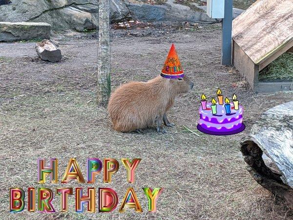 Happy Birthday Capybara
