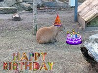 Happy Birthday Capybara