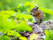 Chipmunk Flower